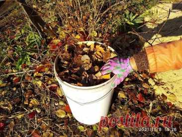 🍂Листья лучше навоза. Что я делаю с опавшими листьями осенью | Урожайная грядка ❀ | Яндекс Дзен
