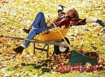 Осенние работы на даче: готовим сад и огород к зиме  Календарь осенних работ