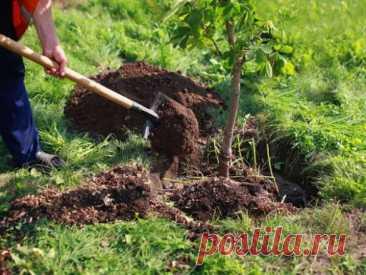 Что и как сажать осенью: деревья, кустарники, цветы и овощи - Статья - Журнал - FORUMHOUSE