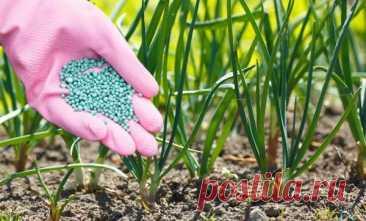 Чем лучше всего подкормить лук на репку или зелень: схемы и правила внесения удобрений Чем можно удобрять лук Лук-репка требователен к питательности грунта. Для того чтобы головки выросли крупными, в почве должны находиться все питательные элементы, необходимые овощу, в особенности азот...