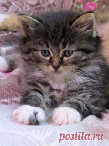 Кот, который хотел вернуться | Сушкины истории | Яндекс Дзен