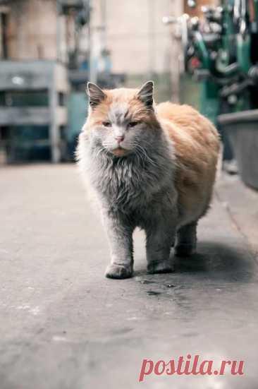 Все хотят вымыть как следует кота Грязнулю. Но это бесполезно