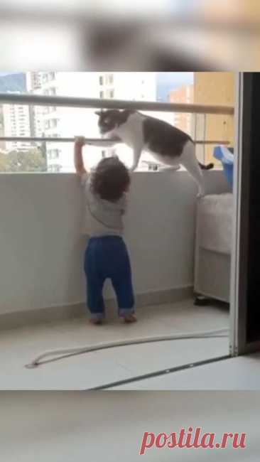 Entrust parenting to a professional | #funnycats #funnypets #funnykitties #funnykittens #catlovers | #funnycat #funnypet #funnykitty #funnykitten #catlover