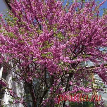 Декоративные кустарники, которые нужно посадить с осени, чтобы наслаждаться красотой в новом сезоне как можно раньше.
