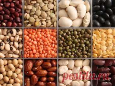 Бобовые — продукт для тех, кто хочет похудеть