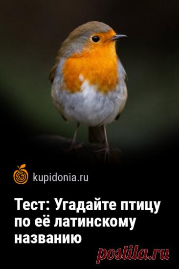 Тест: Угадайте птицу по её латинскому названию. Птицы— одни из самых интересных жителей нашей планеты. У каждой из них есть латинское название, которое отличается от общеупотребимых. Этот состоит из 20 вопросов. Проверьте ваши знания или проявите сообразительность, чтобы ответить правильно на большинство из них.