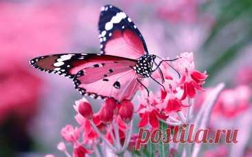 ТОП-10 самых красивых бабочек в мире