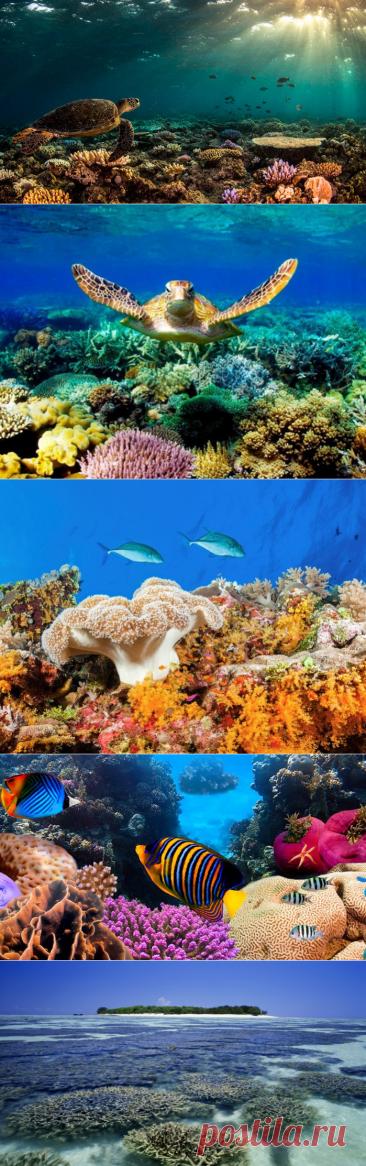 Морской национальный парк - Большой Барьерный риф в Австралии
