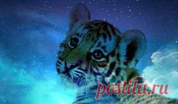 Голубой водяной тигр - символ 2022 года: что важно знать о главном символе
