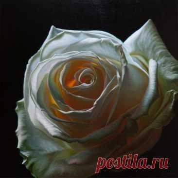 La rosa del Cuadro y el arte de flores - Vinsent De coco