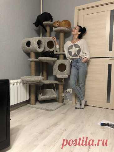😂💪А мы заряжаемся позитивом от новоселья в Москве 🤗🐾Ещё раз выражаем огромную благодарность за заказ и за позитив хозяюшке Марии Кирилловне🥰🥰 #когтеточкикиров #беговоеколесодлякошек #кототренажер #kogtetochki_rus #cat #cats #russia #catstagram #caturday #cats_of_instagram #kittycat #kittiesofinstagram #izrael #germany #usa #turkey #greece #italy #belgium #kitaindonesia #беларусь #казахстан #ржев #ростовнадону #рыбинск #ряжск