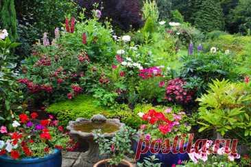 Растения-захватчики, которые будут расти на любом месте и вытеснят сорняки
