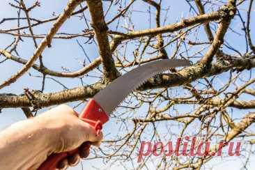 Обрезка плодовых деревьев: фото и советы Николая Курдюмова