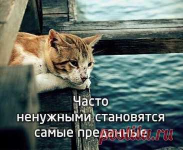He бросайте животных они же нам верят до последнего....
