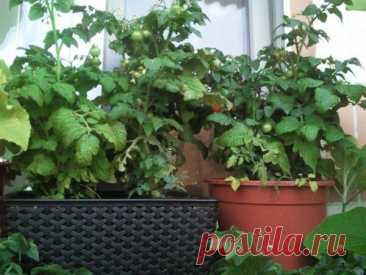 Огород на балконе своими руками: как устроить и что посадить
