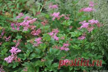 Ещё 10 растений для цветника в природном стиле | Сады и цветы | Яндекс Дзен