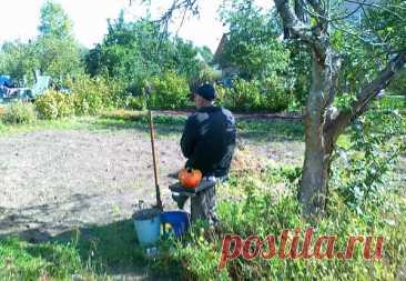 Что мы сажаем и сеем в октябре: октябрьская народная шпаргалка
