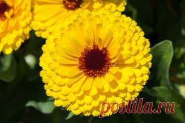 Роскошный сад и никаких хлопот. 8 самых неприхотливых декоративных культур для дачного цветника | Рекомендательная система Пульс Mail.ru