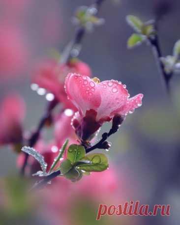 У красоты, как и у любви,  измерение - вечность...