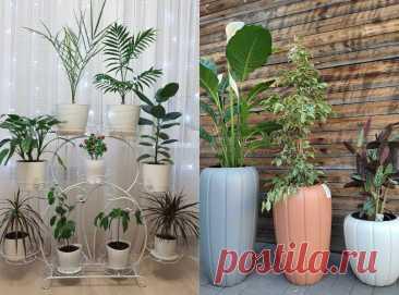 5 безобидных привычек, из-за которых страдают комнатные растения | Дом Мечты Элис | Яндекс Дзен