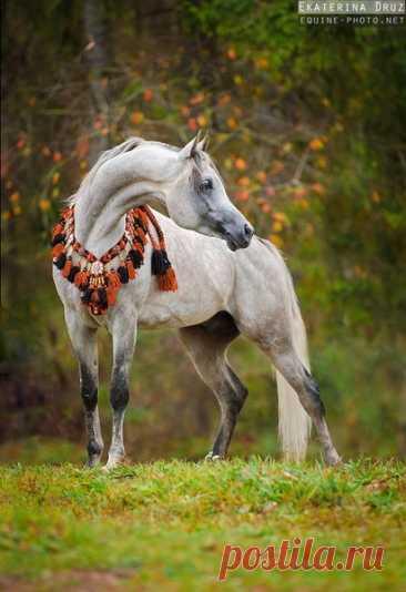 Екатерина Друзь: «Я люблю снимать лошадь в свободном движении» – Блог. Run, пользователь Марина Николаева | Группы Мой Мир