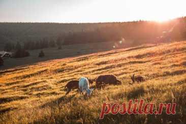 Старайтесь употреблять мясо только от проверенных производителей. Говядина, баранина, свинина и мясо домашней птицы должны быть получены от животных, выращенных на пастбищах, а рыбу покупайте только выловленную в естественных водоемах.