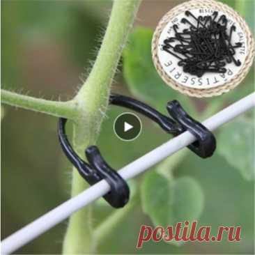 Пластиковые зажимы для фиксации растений, зажимы для томатного крепления, стойка для винограда, крепежи для садовых, сельскохозяйственных линий в комплекте, 50/100 шт.   Дом и сад   АлиЭкспресс