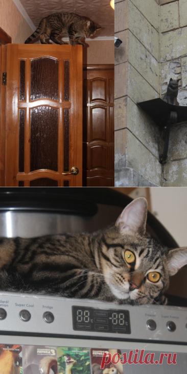 Любая высота для котиков как дерево: чем выше, тем круче. Сидит же кот на Малой Садовой в Питере, пристроившись к дому.  Наш тоже сидит, где хочет, лежит, где хочет, и ходит, где хочет. Он даже по стенкам лазать может. Что поделать, кот ведь. Фотографии сделаны автором канала   Пушистые  новости от Шерхана   Яндекс Дзен