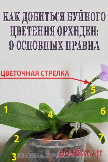 Как добиться буйного цветения орхидеи: 9 основных правил - Упражнения и похудение