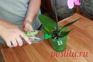 3 важных изменения в уходе за орхидеями с приходом осени, чтобы сохранить их красоту