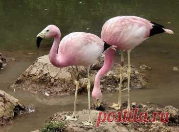 The brightest representatives of fauna