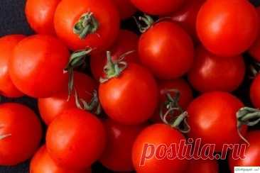 Самые легкие в выращивании сорта помидор