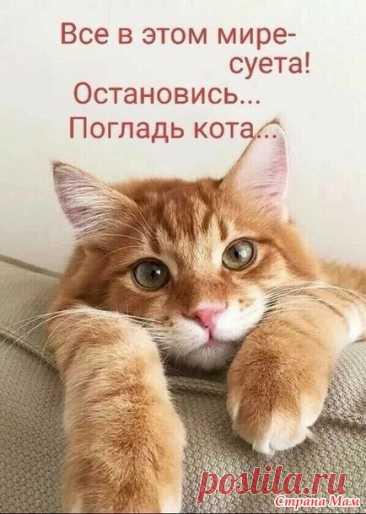 Котоюмор - 11 - ВЯЗАНАЯ МОДА+ ДЛЯ НЕМОДЕЛЬНЫХ ДАМ - Страна Мам