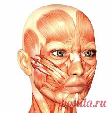 Омолаживающее упражнение «Ленточки»: корректируем натяжение мышц лица
