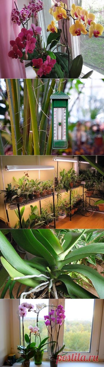 Todo que es necesario saber el florecimiento de las orquídeas... ¡Los Secretos de la partida correcta!