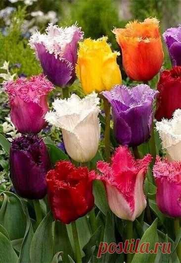 цветы | Facebook