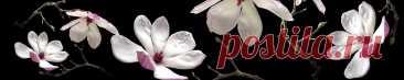 Скинали белые цветы на черном фоне изображения для кухонного фартука