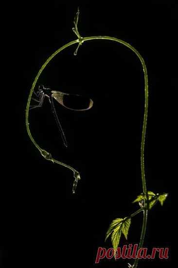«Спать или не спать – вот в чём вопрос» Кадр участвует в спецноминации «Совершенство от природы» в рамках нашего флагманского фотоконкурса «Дикая природа России 2019» –bit.ly/NaturalPerfection2019. Автор снимка – Dar_Veter: А вы уже ложитесь?