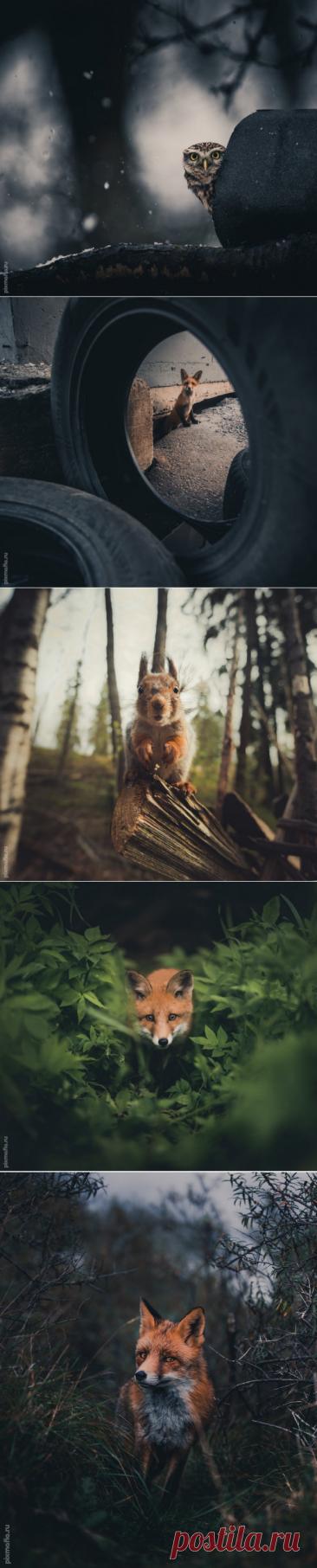 Гармония диких животных и природы в Фотографиях (27 фото)