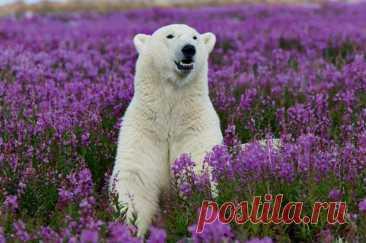 Живая природа Арктики от немецкого фотографа Michael Poliza.