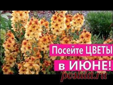ПОСЕЙТЕ эти ЦВЕТЫ в ИЮНЕ! Они порадуют цветением в следующем году.
