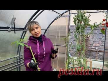 Не выбрасывайте томатную ботву! Лучше приготовьте из нее супер удобрение