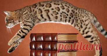 Топ-8 своенравных пород кошек | Kinpet: мир кошек и собак | Яндекс Дзен