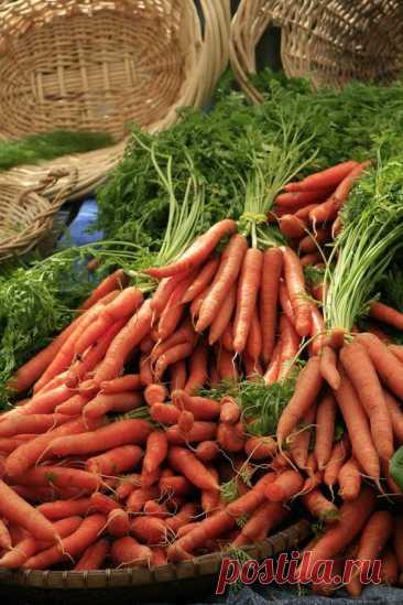 Как обычная скорлупа увеличит Вам урожай моркови