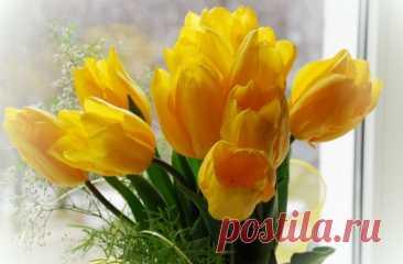 Подарили желтые тюльпаны: что это означает? Считается что желтые тюльпаны к разлуки, но так ли это на самом деле, и что в действительности означают желтые тюльпаны