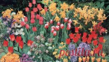 Особенности выращивания многолетних цветов, разведение и ухода за ними. Существует два диаметрально противоположных мнения по поводу выращивания многолетних цветов: первый - многолетники - это здорово, ткнул в землю и забыл, а они цветут себе многие годы! Второй - многолетники - это головная боль на многие годы, укрывай, открывай, пересаживай... Истина, как известно, лежит посередине. Действительно, несомненным достоинством многолетних цветов является их долгая жизнь.