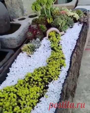 Exquisite Succulent Planter... WOW😱🌱