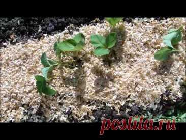 Подготовка грядки для клубники - Сад и огород