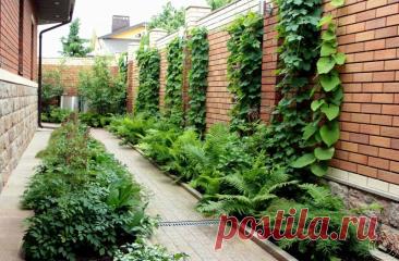 Как оживить тенистые участки сада | ДОБАВЬ ЦВЕТОВ! | Яндекс Дзен