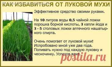 ➡ Моя Уютная Дача, сад и огород Подпишись